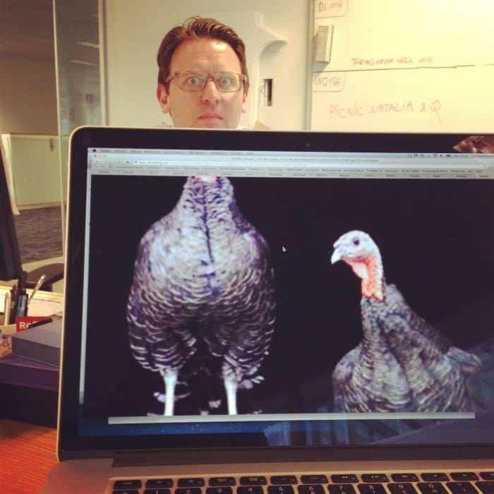 chicken man kantoor