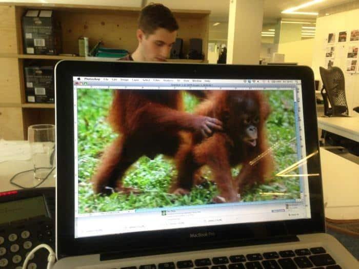 gorilla man kantoor