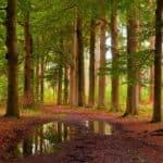 Top 8 bezienswaardigheden in Hilversum